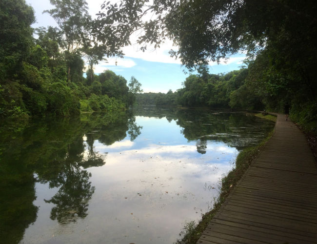 Running in Singapore's MacRitchie Reserve
